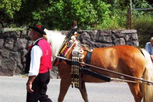 Festlich geschmücktes Pferd für Festumzug